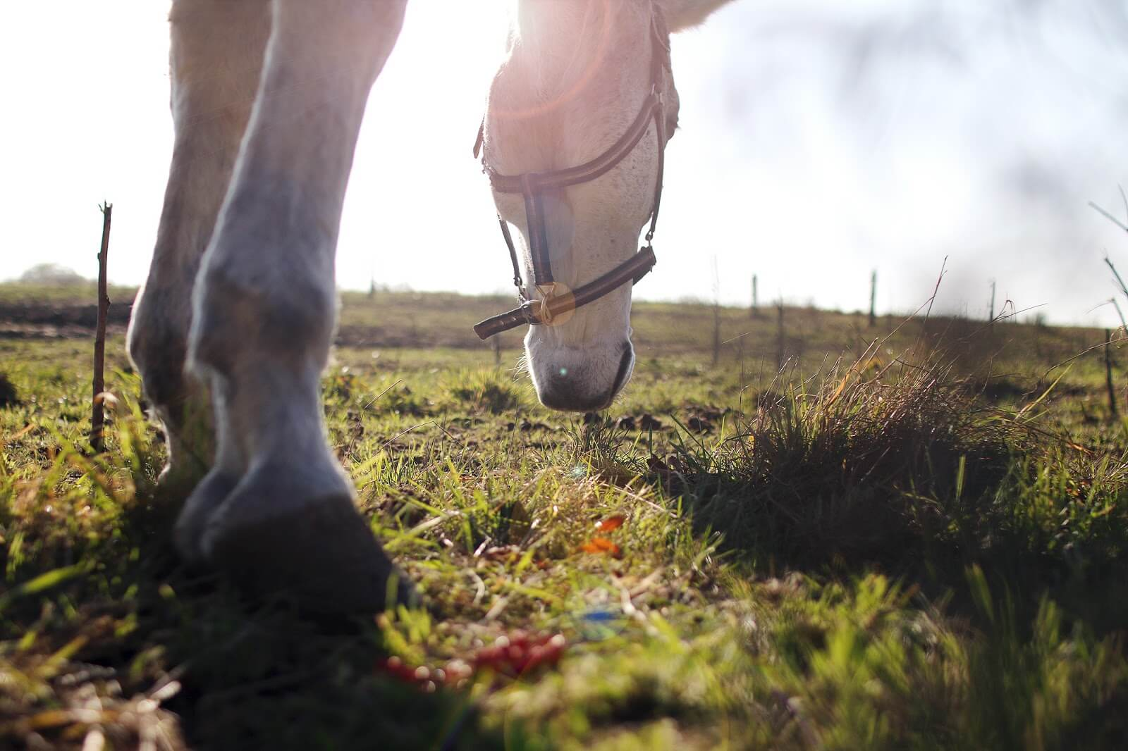 horse's hooves, feet & head while eating