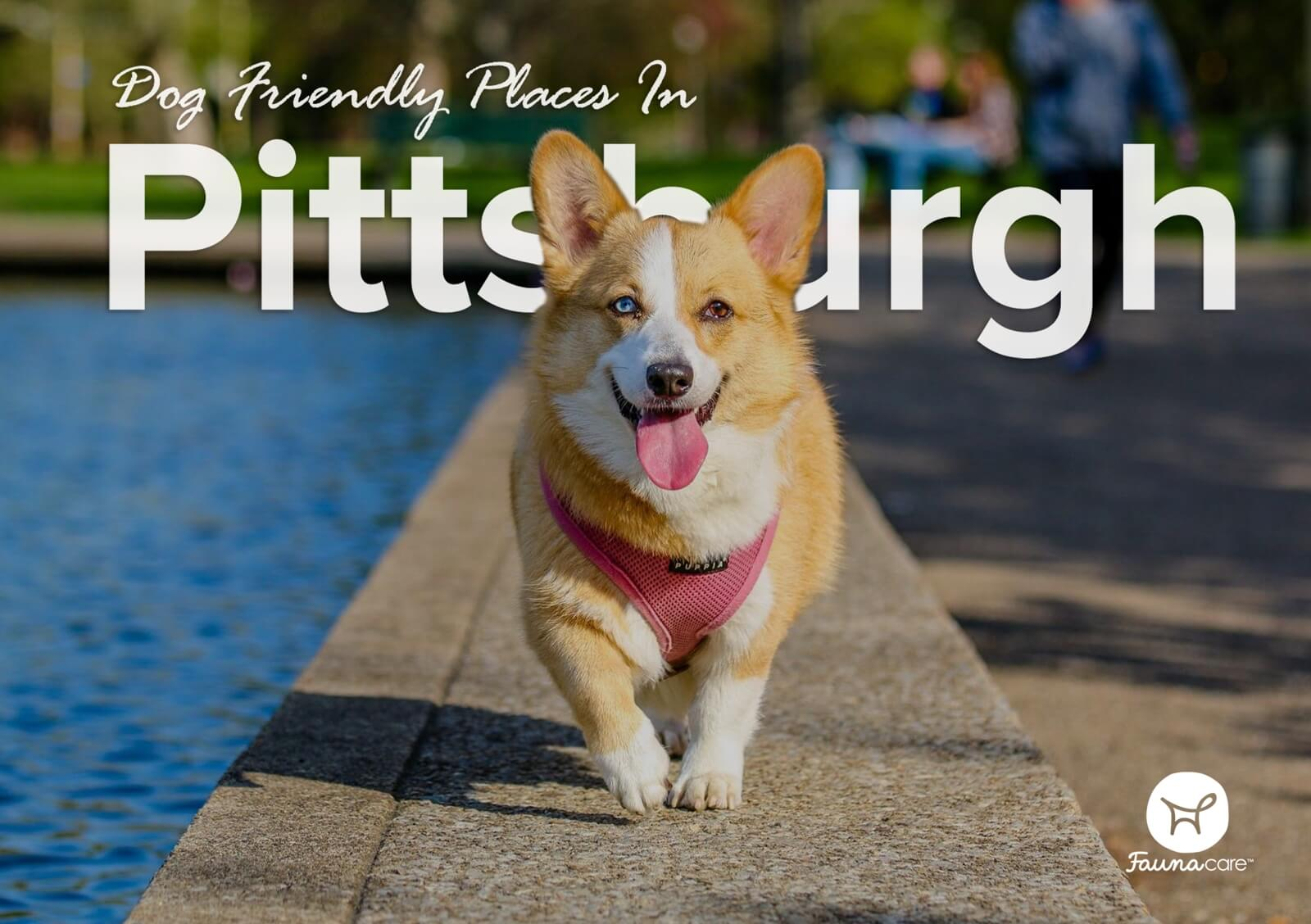 Dog Friendly Places In Pittsburgh