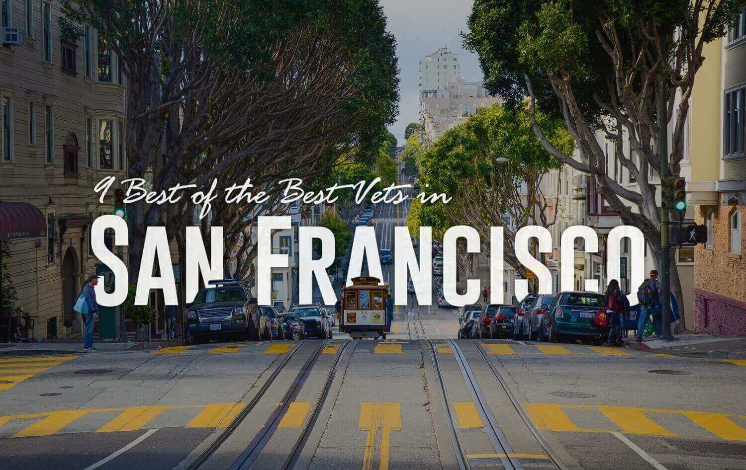 9 Best of the Best Vets in San Francisco