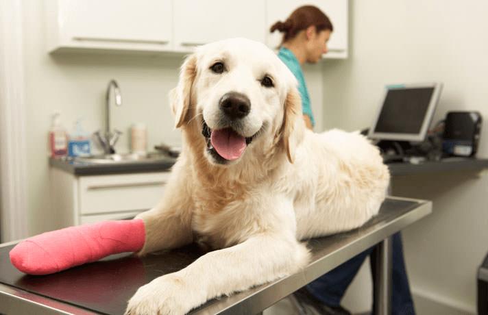 injured dog laying on vet table