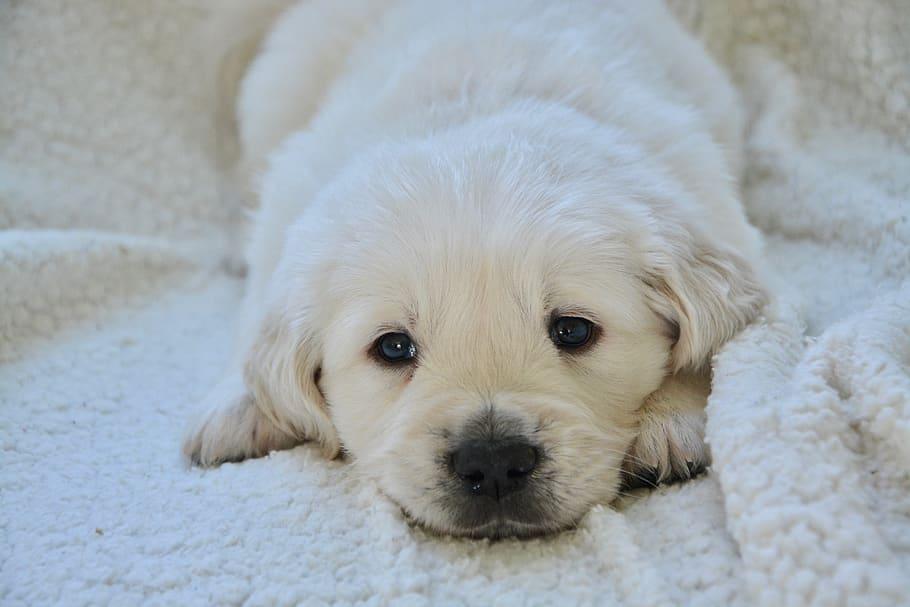 sad puppy lays down