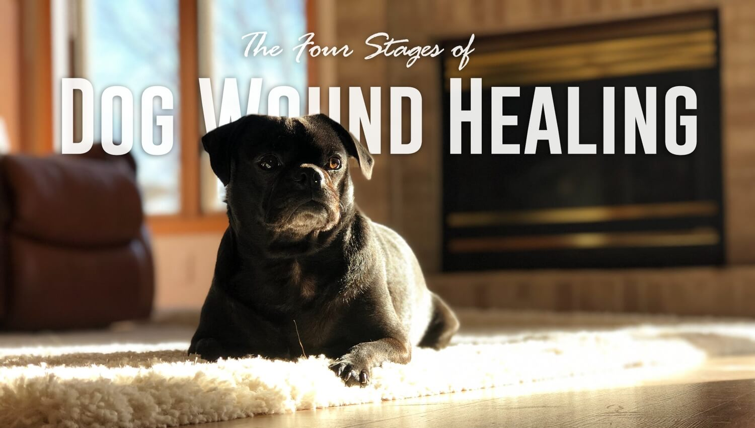4 stages of dog wound healing