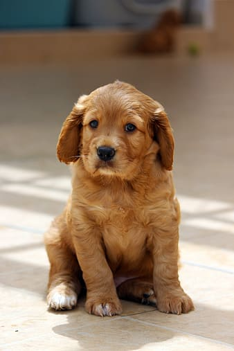 puppy staring at you