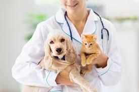 kitten & dog with vet