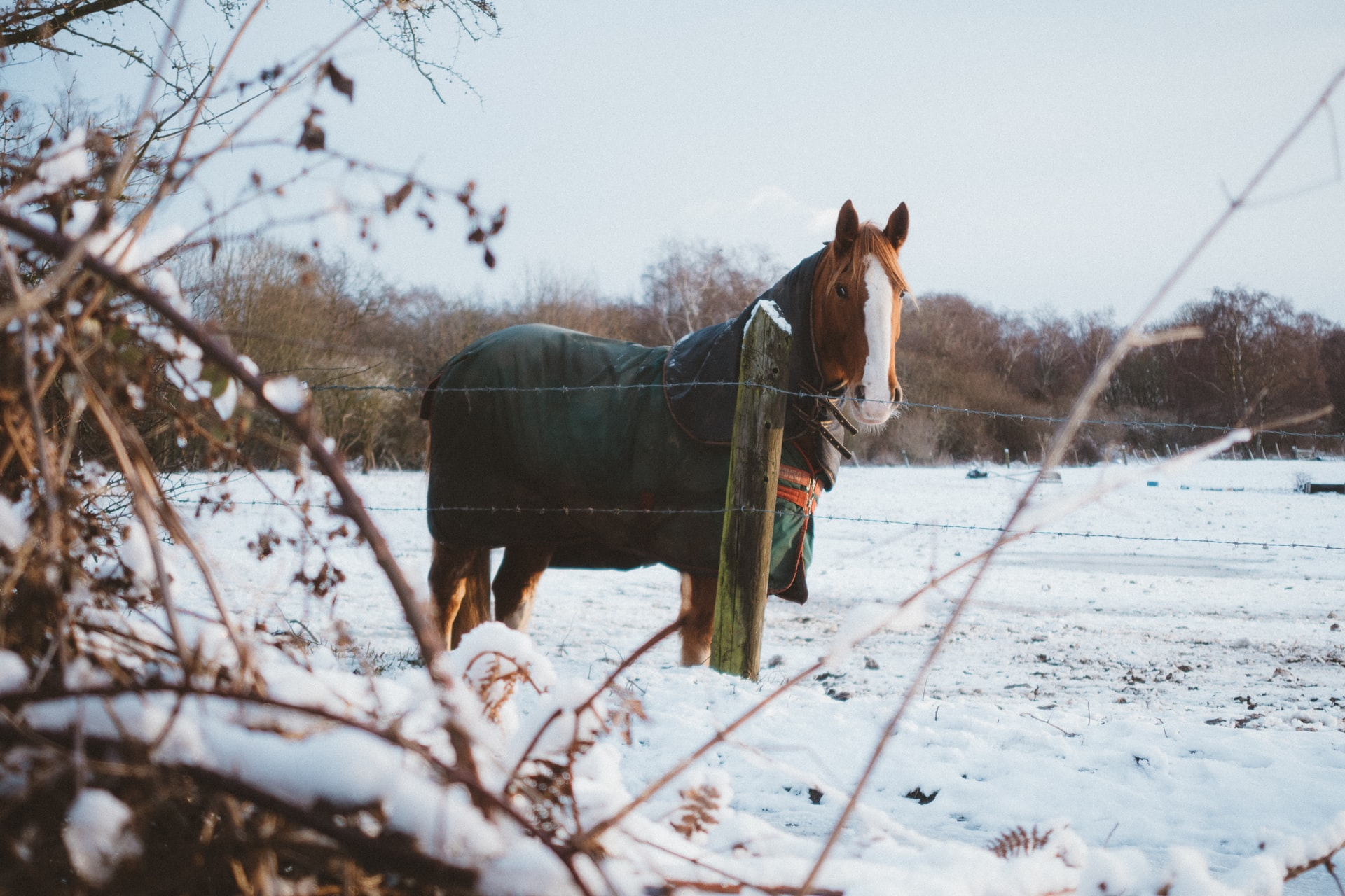 a horse wearing a blanket stands in a snowy field