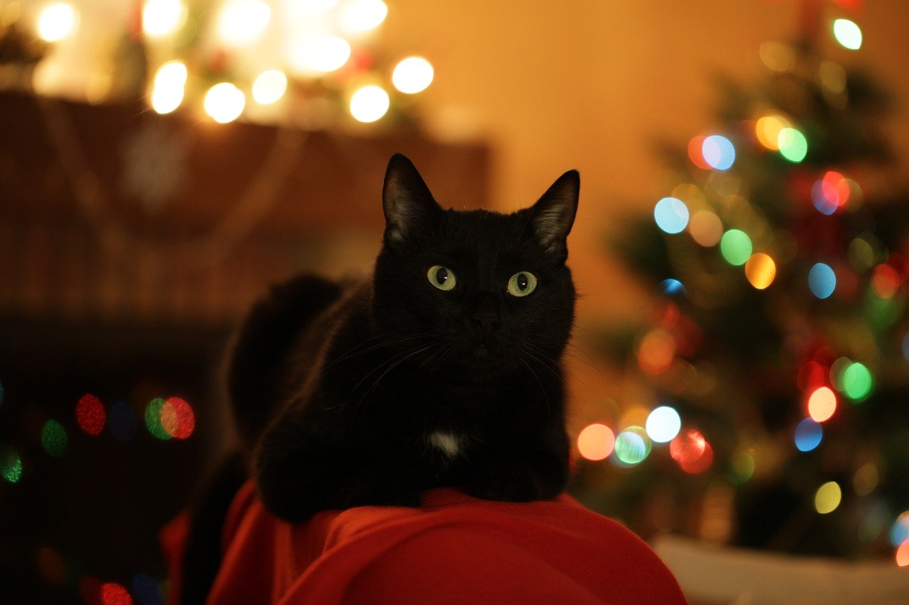 Purrrfect Present Ideas For Cat Owners You Can Get This Holiday Season