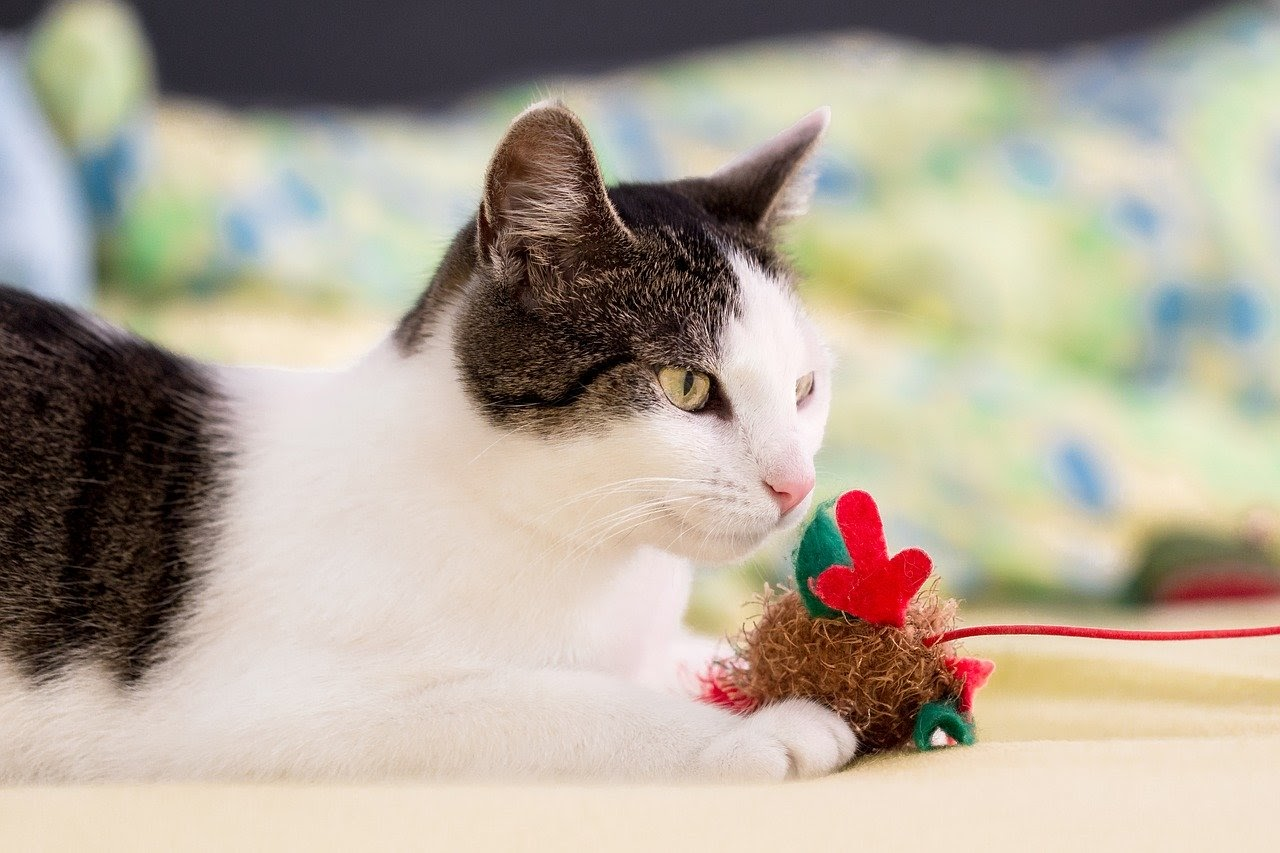 A cat playing with a toy mouse on a string