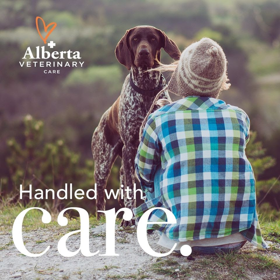 Alberta Veterinary Care. Handled with care. Photograph of a dog looking at the camera standing in front o their owner who is sitting facing away from the camera.