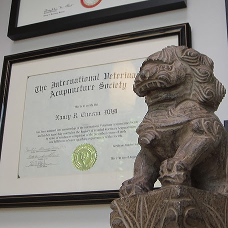 A small statue of a lion in front of a certificate for Veterinary Acupuncture