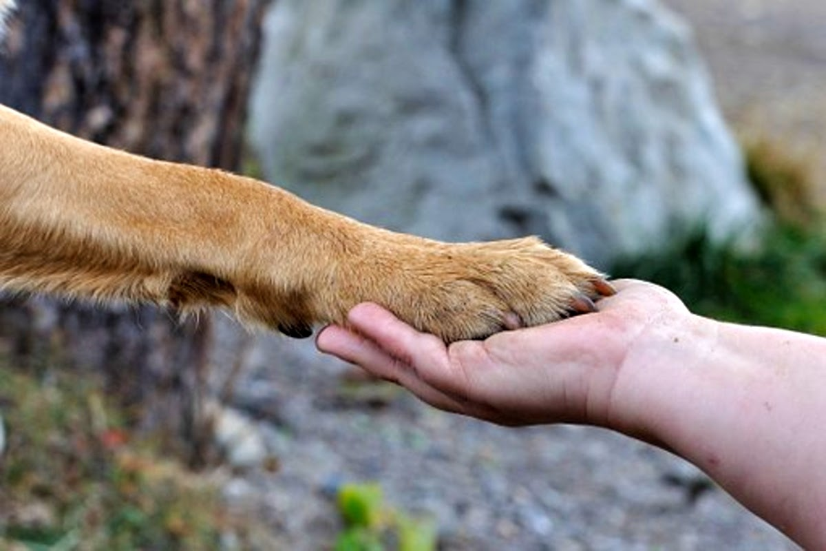 Dog and kid holding hands
