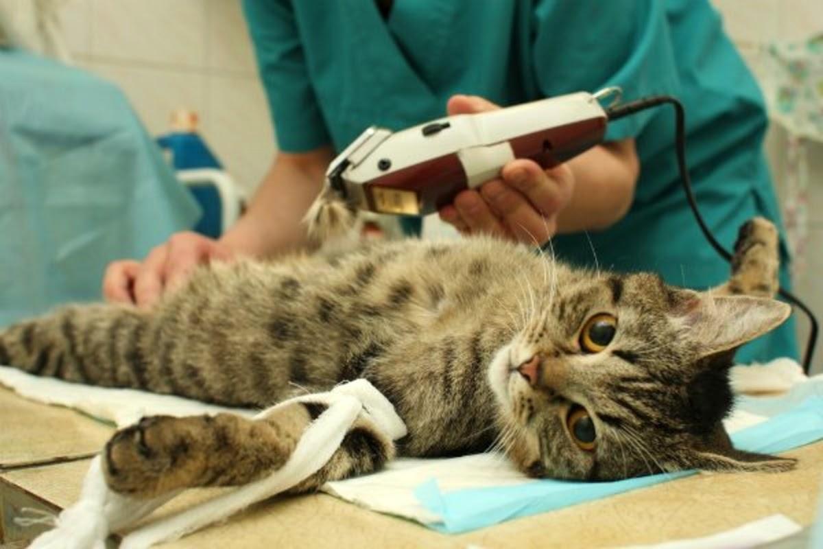 cat at a vet