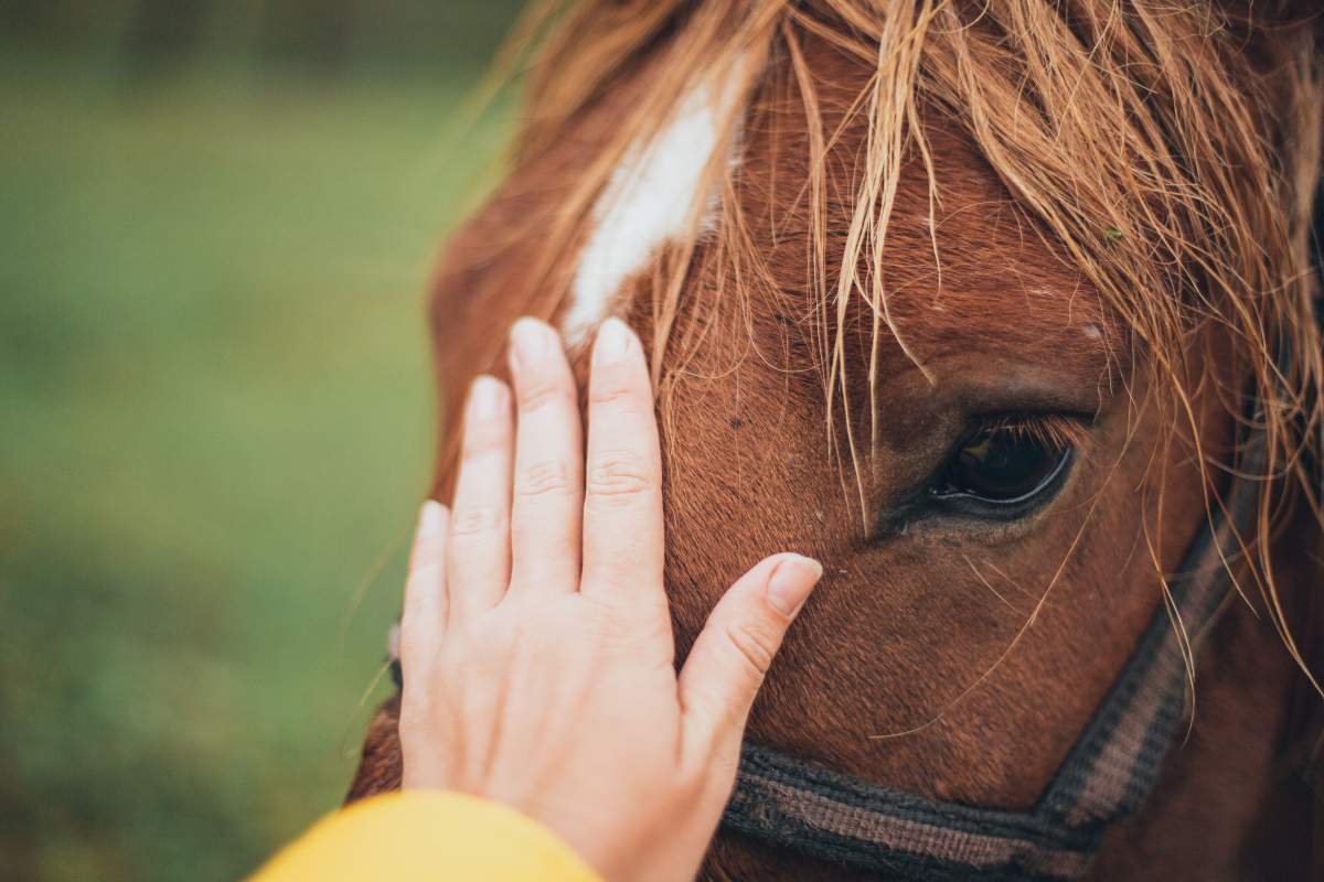 Tips For Taking Care of Your Horse After a Ride