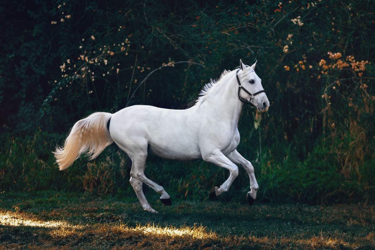 white horse running in front of a forest and flowers