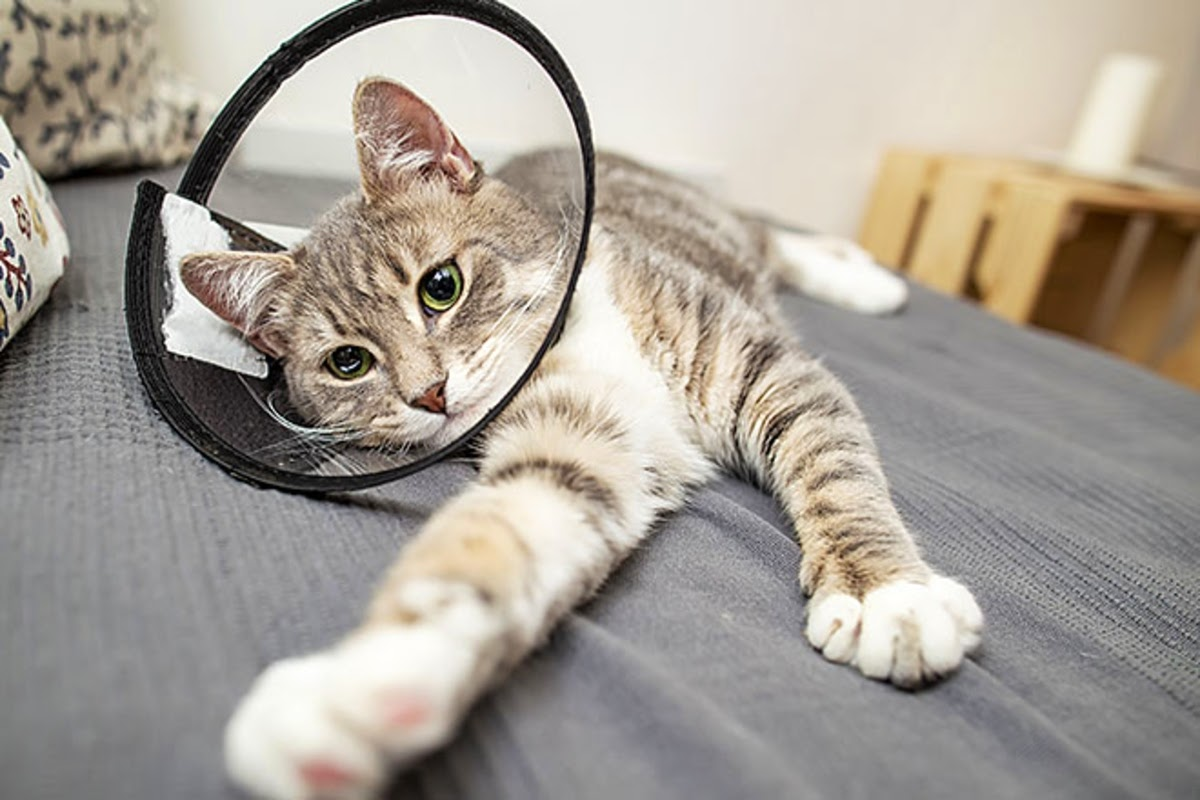 cute cat with a cone on its head