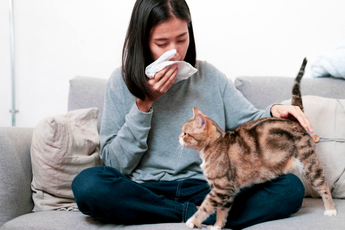 Everything You Need To Know About Getting Rid Of Cat Dander.
