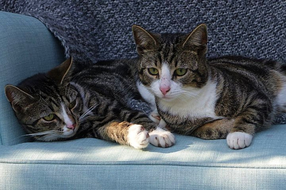 multiple cats on a couch