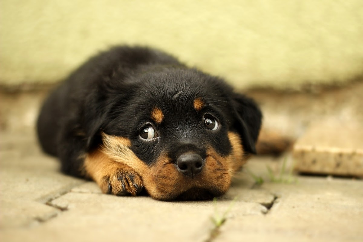adorable puppy giving side eye