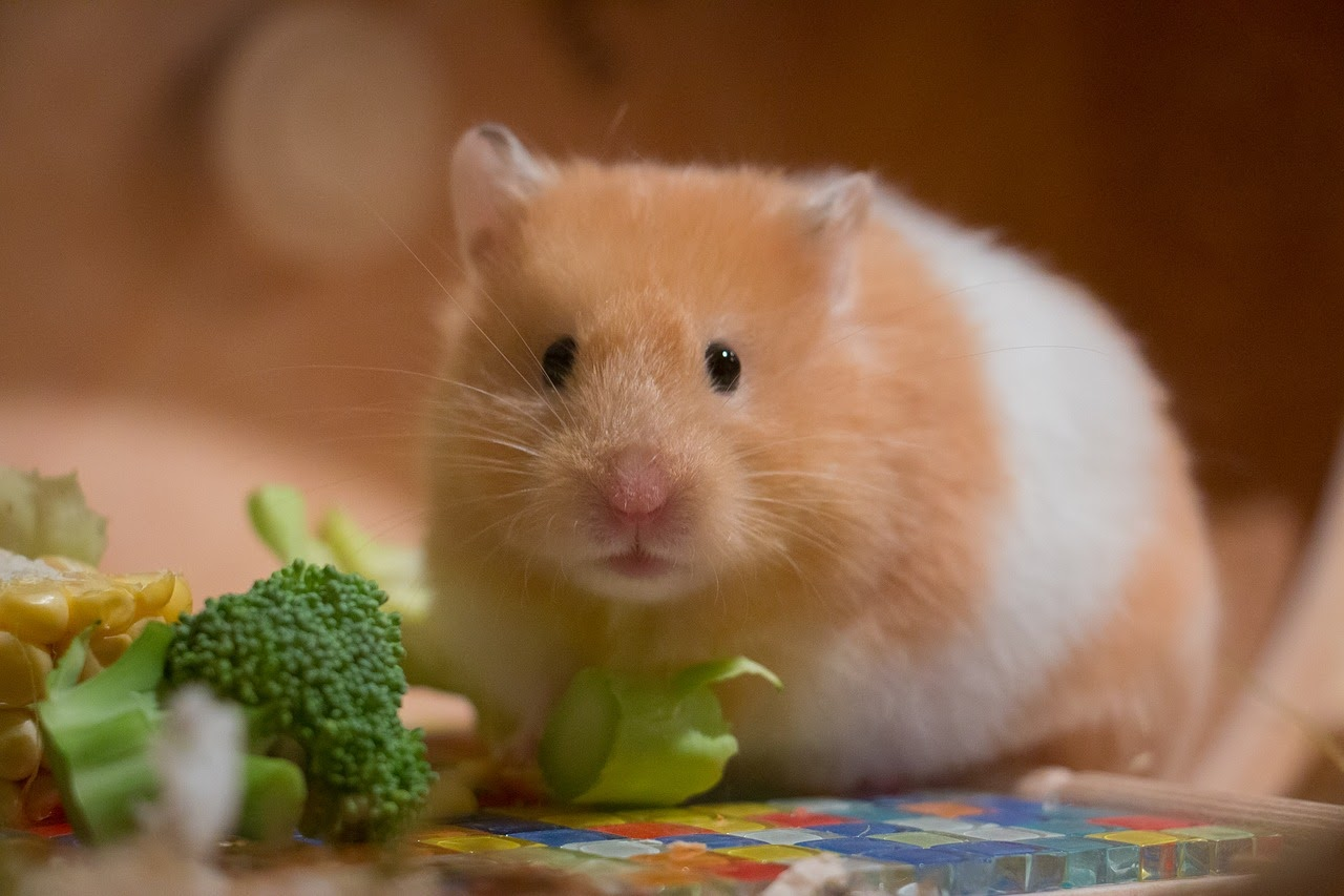 hamster sitting next to some broccoli