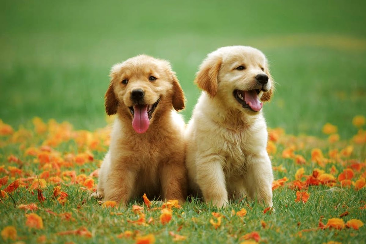 two adorable puppies in a field with flowers