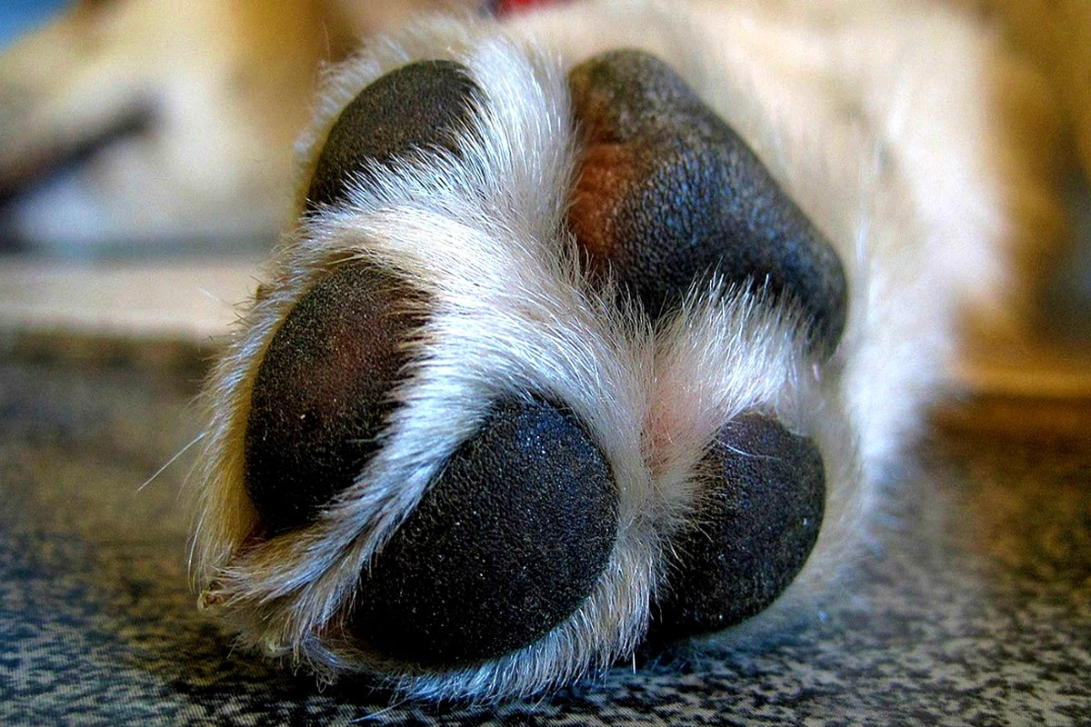 close up of dogs paw