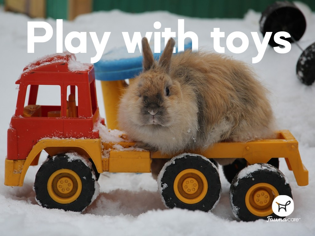 Rabbit playing with toys