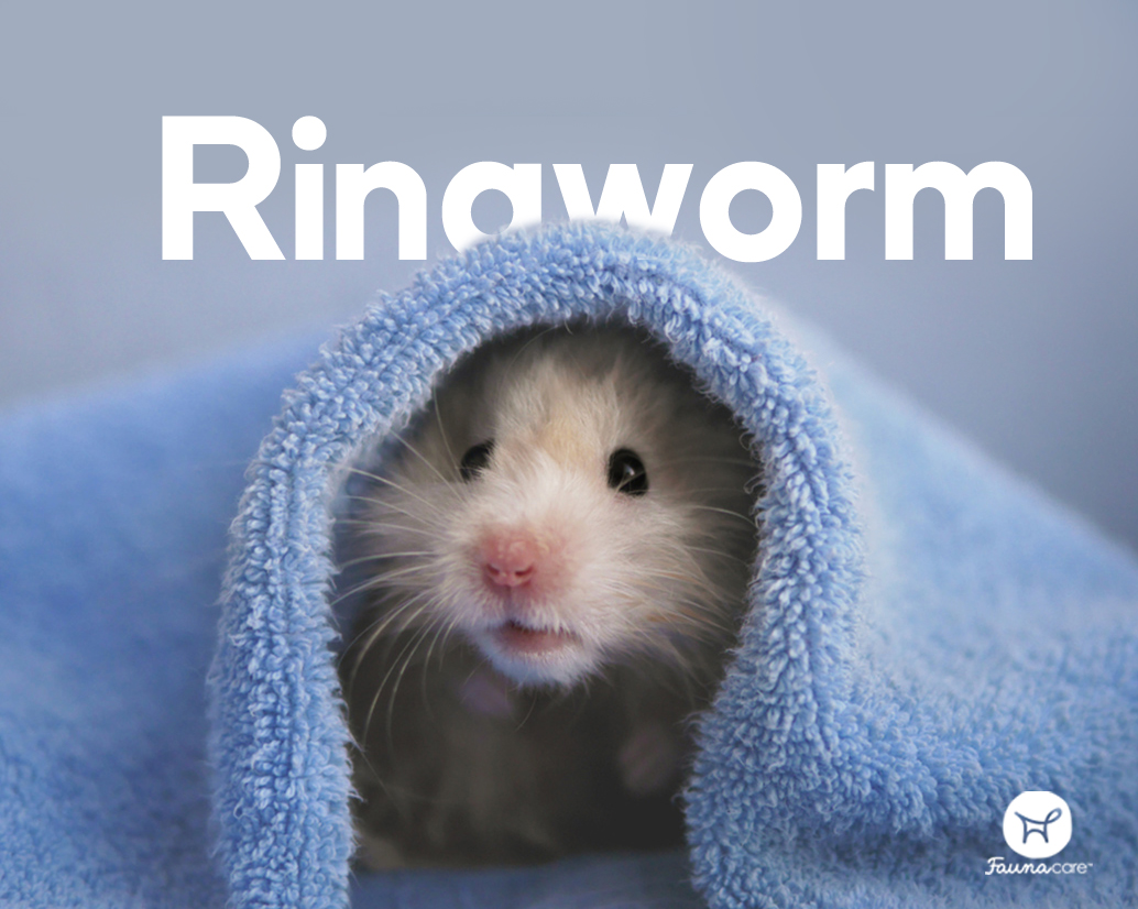 hamster under a towel