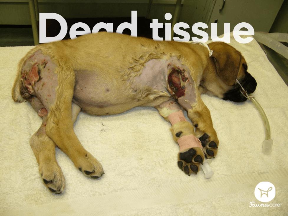 injured dog at vet