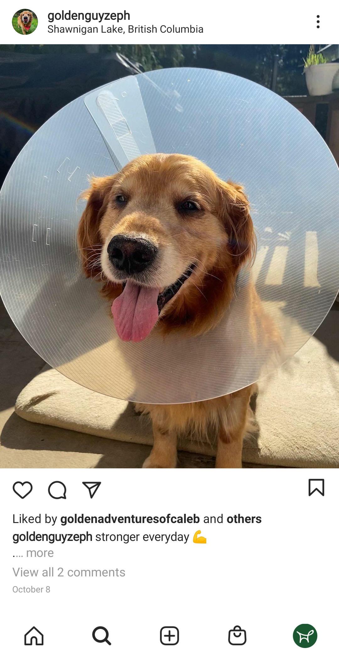 A dog wearing elizabet collar