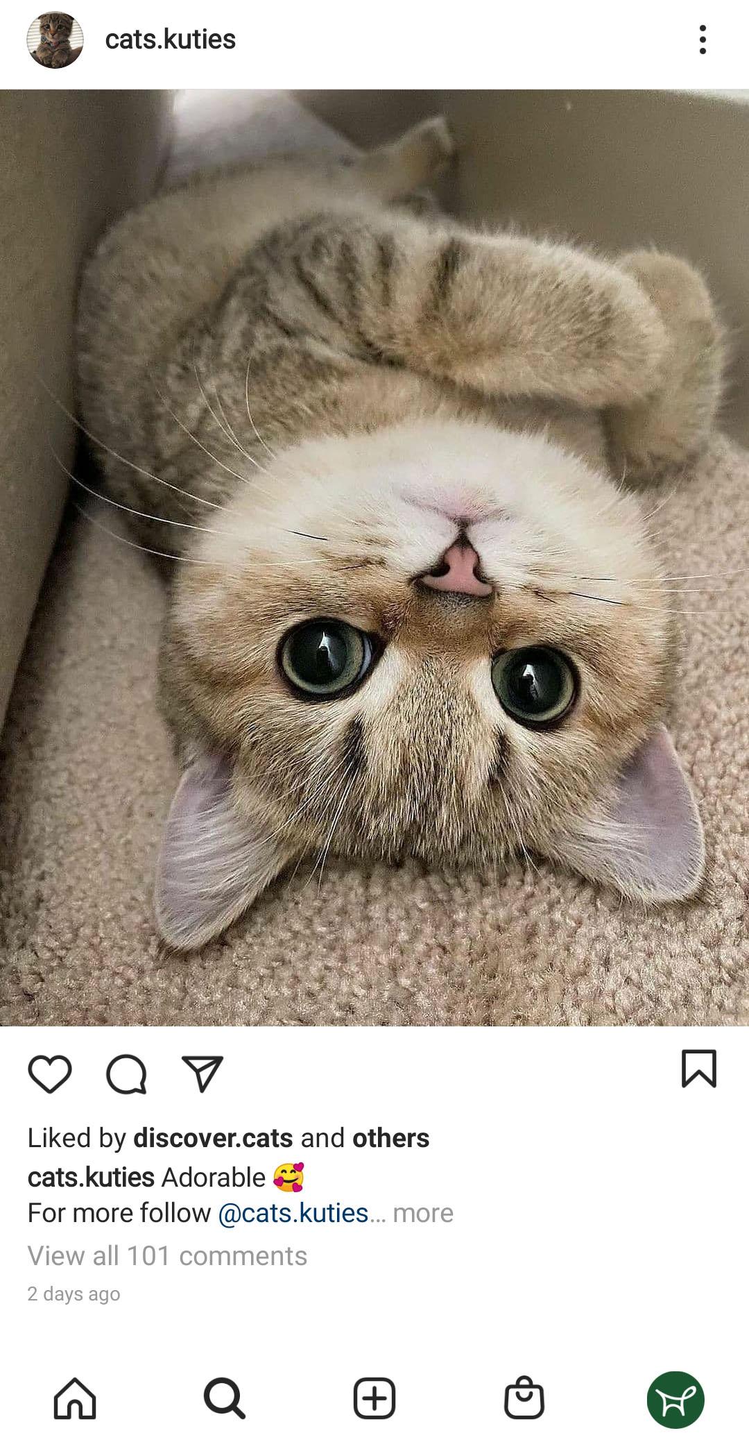 cat lying ont the floor