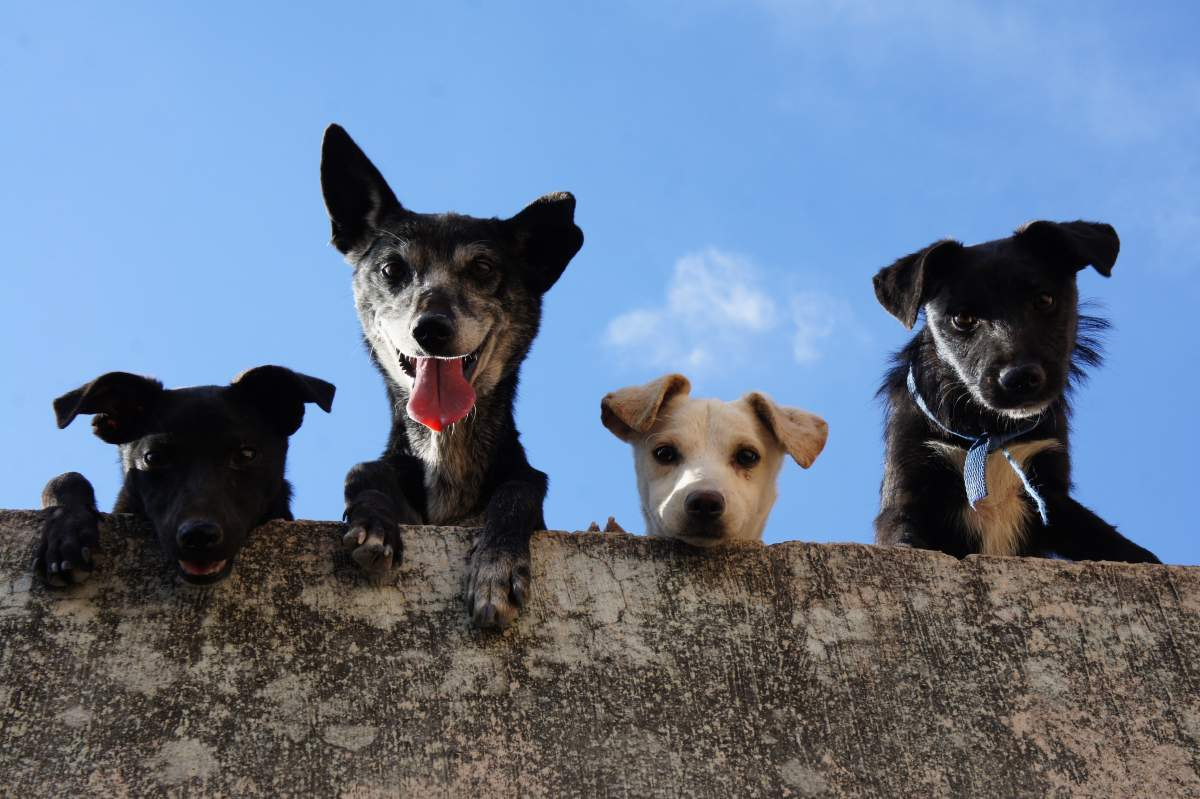 Four dogs looking over a ledge down at the camera