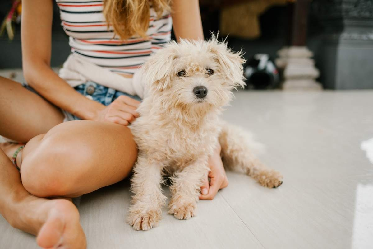 Small white fluffy dog sitting next to a girl wearing a striped shirt