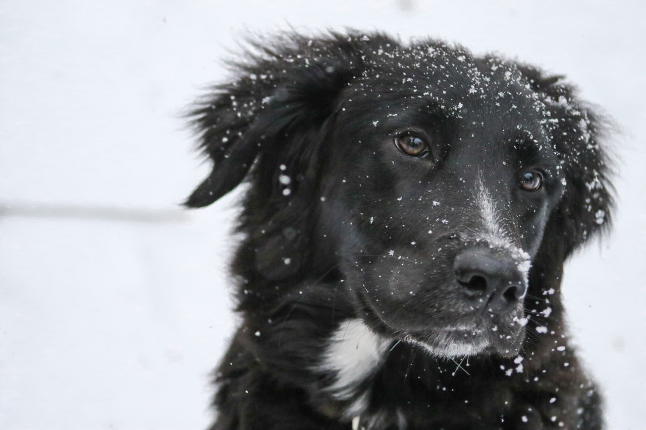 The Top 6 Winter Essentials Every Dog Needs