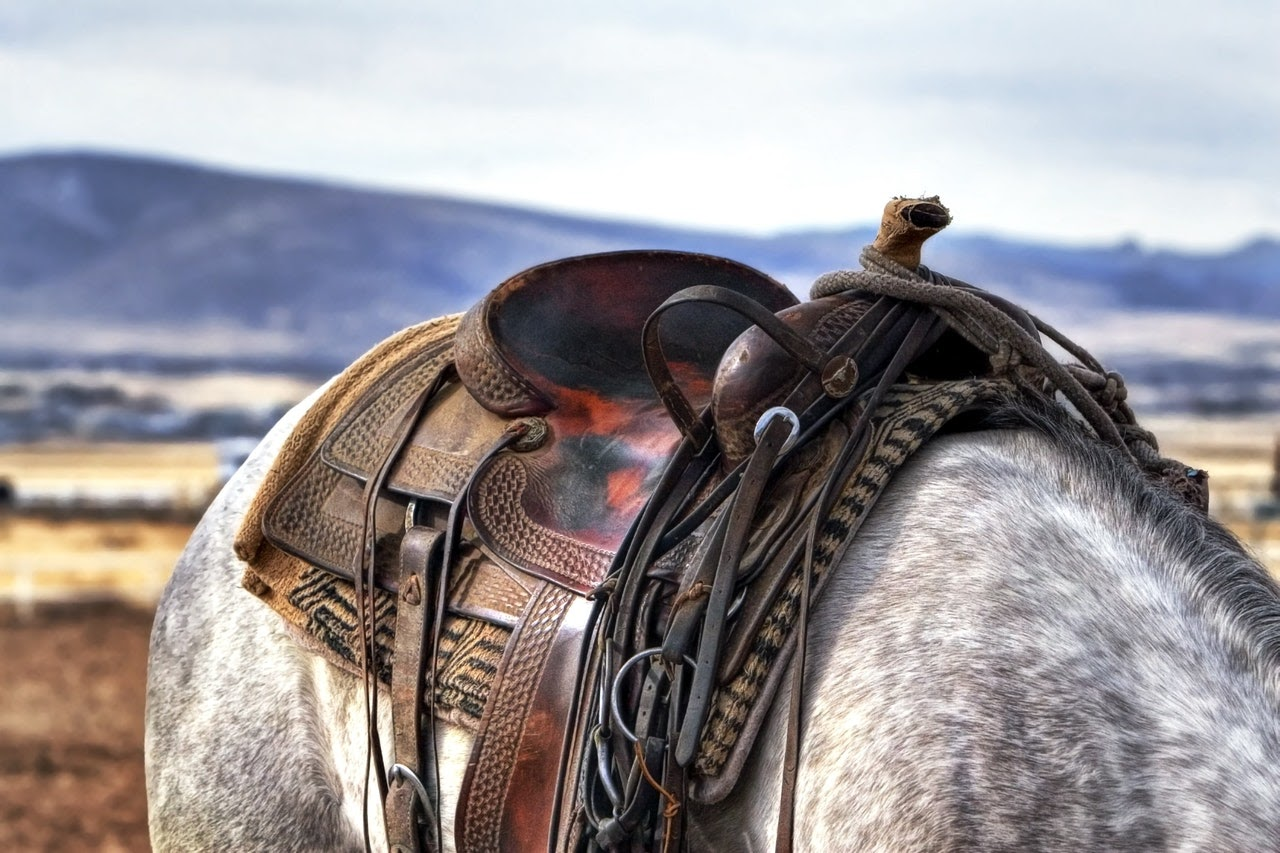 A closeup of a brown western style saddle on a gray horse.