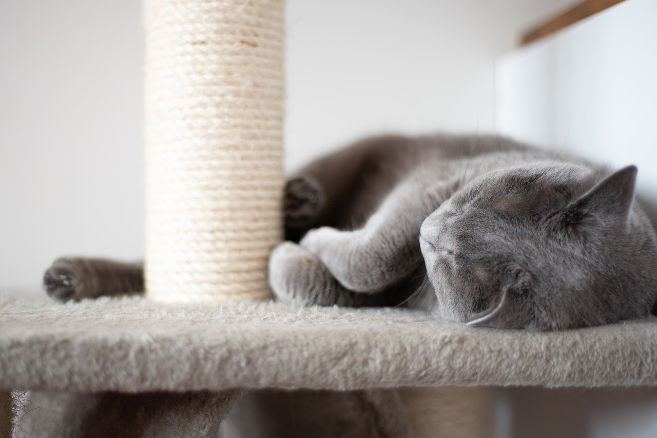 A gray cat lies down on the platform of it's scratch post/cat tree.