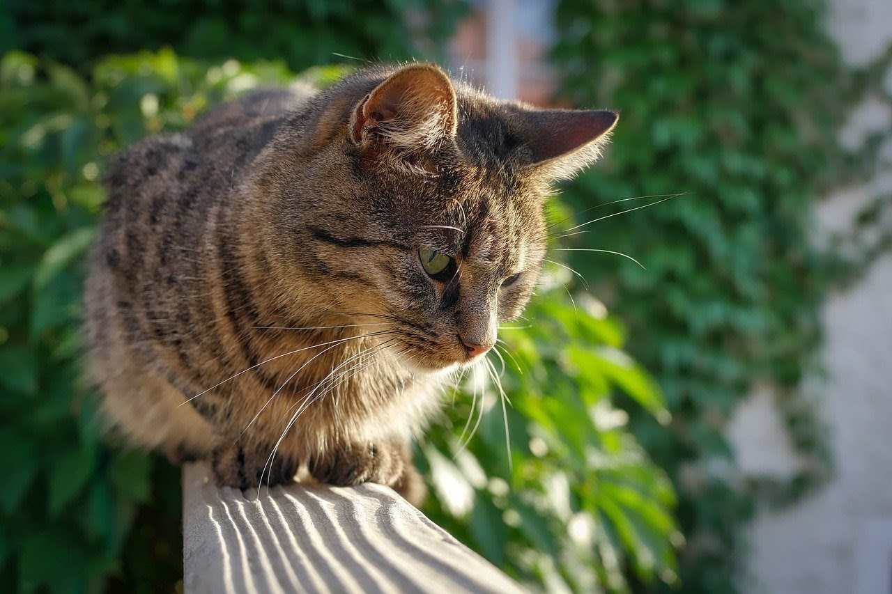 A brown tabby cat sits on top of a gate.