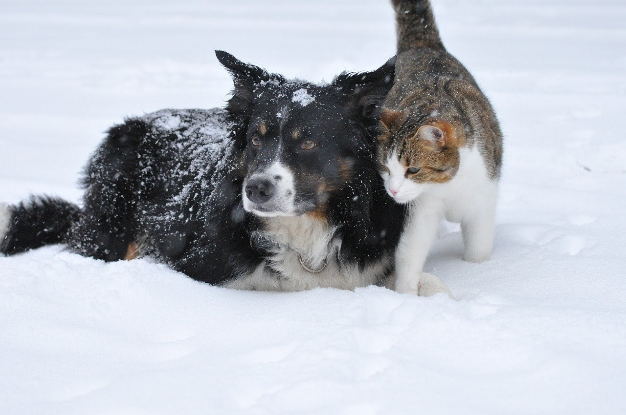 A black dog with a white muzzle and a brown and white tabby cat sit in the snow.