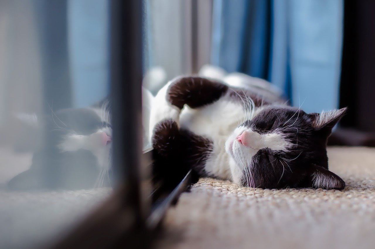 A white and black cat lies against a glass door.