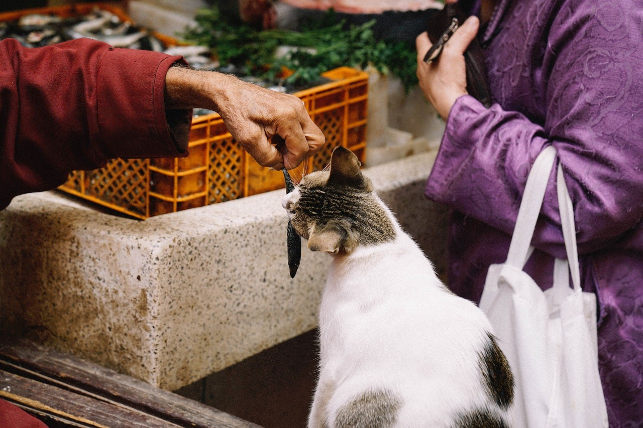 A black and white tabby cat eats an offered fish from a person's hand.
