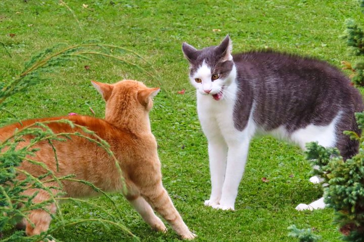 What To Do If Your Cat Is Bitten By Another Cat