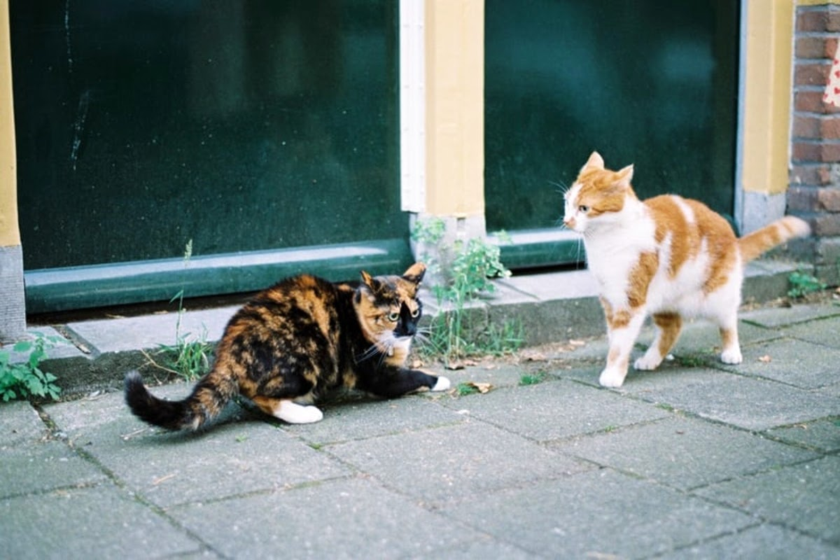 2 cats being territorial