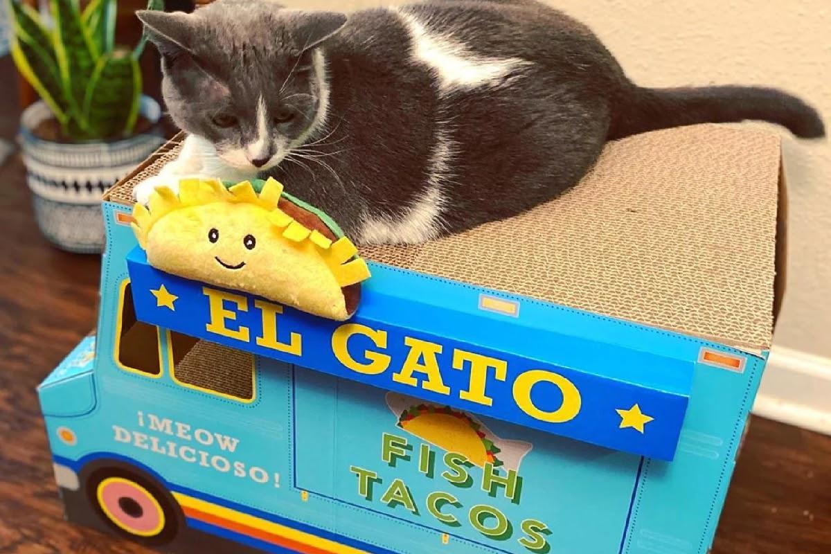 cat on tiny taco truck