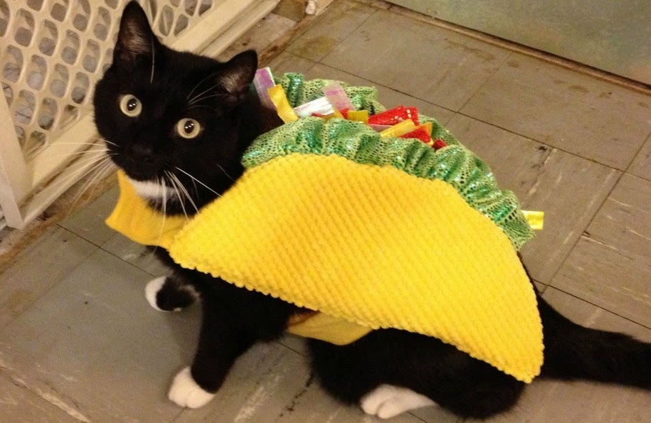 How To Make Cat Friendly Fish Tacos
