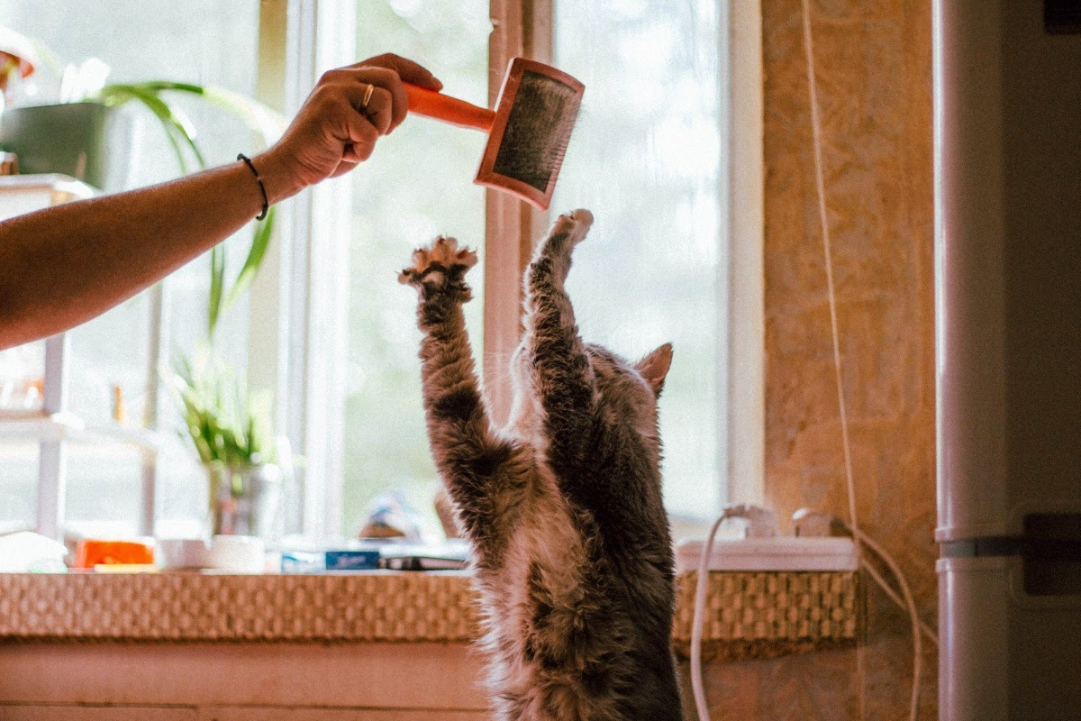 cat playing with brush