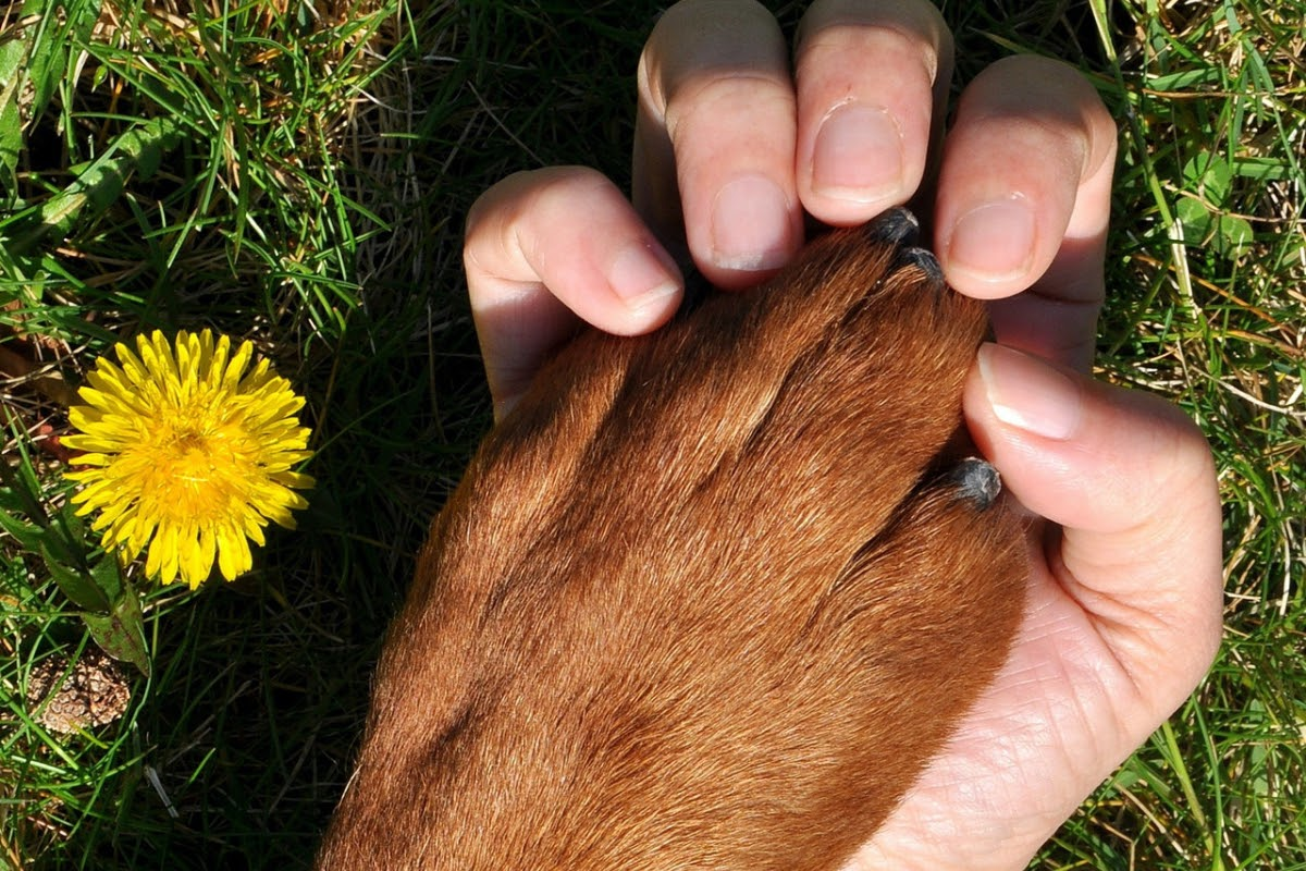 dog and human holding hands/paws