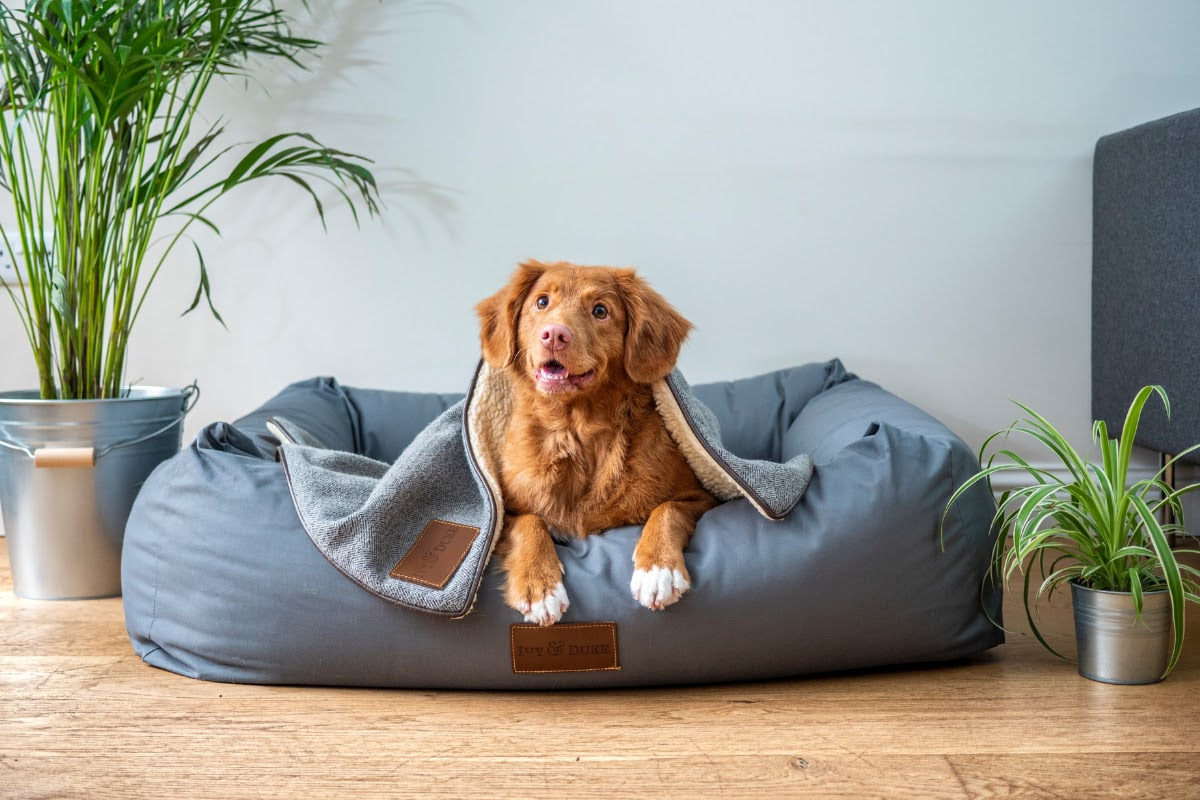 Dog in a big dog bed