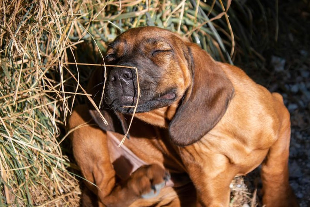 dog outdoors by the hay