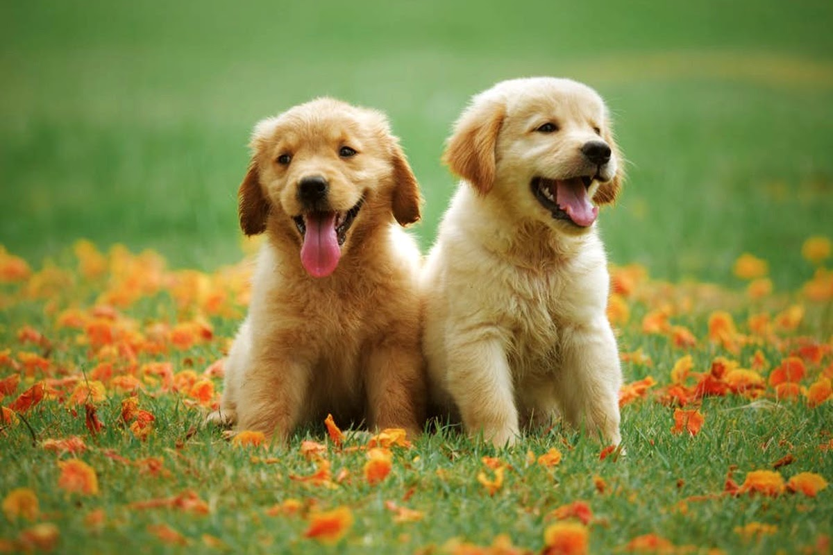 Two happy puppies outside