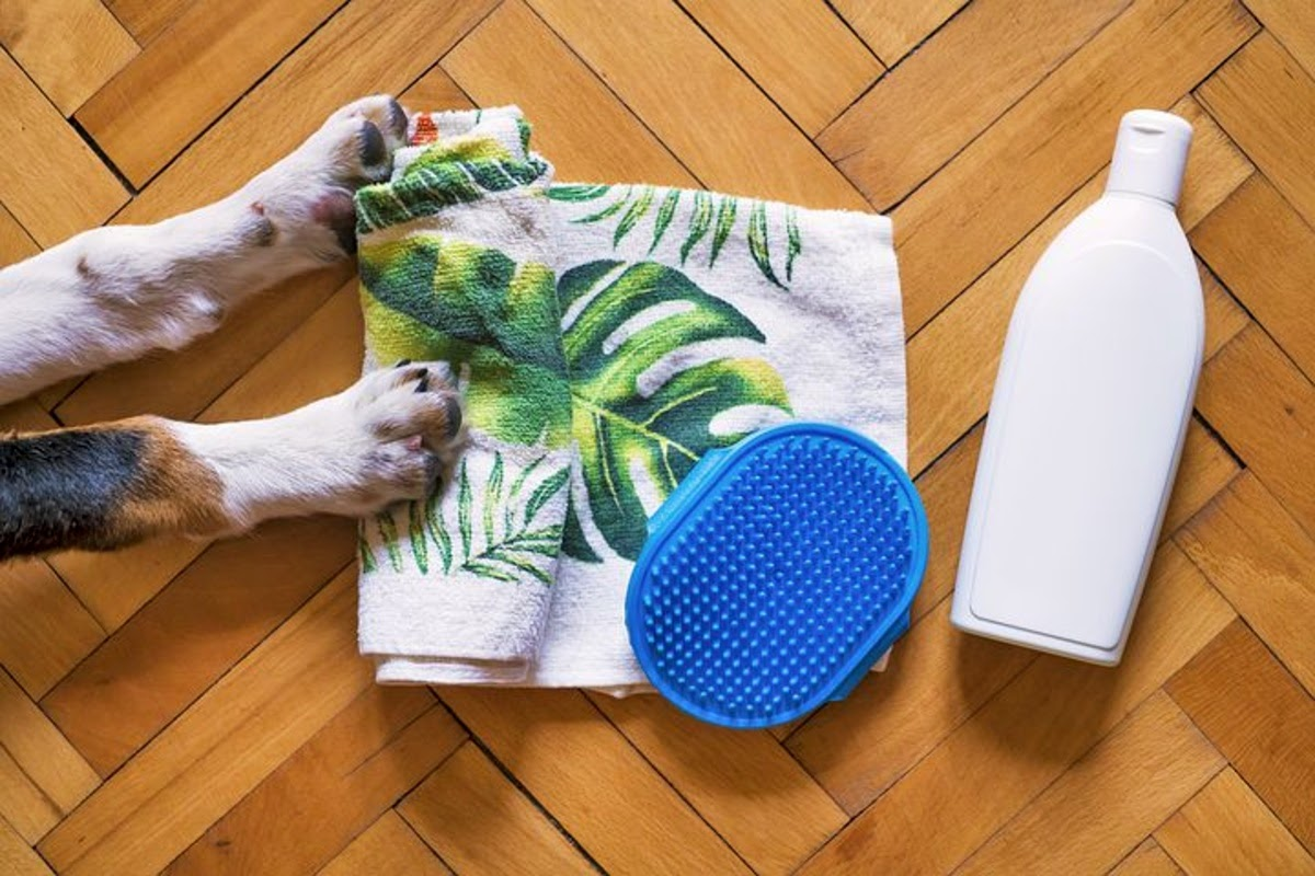 dog paws next to grooming products