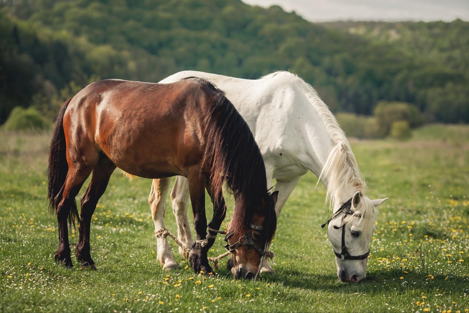 horses healthy grazing