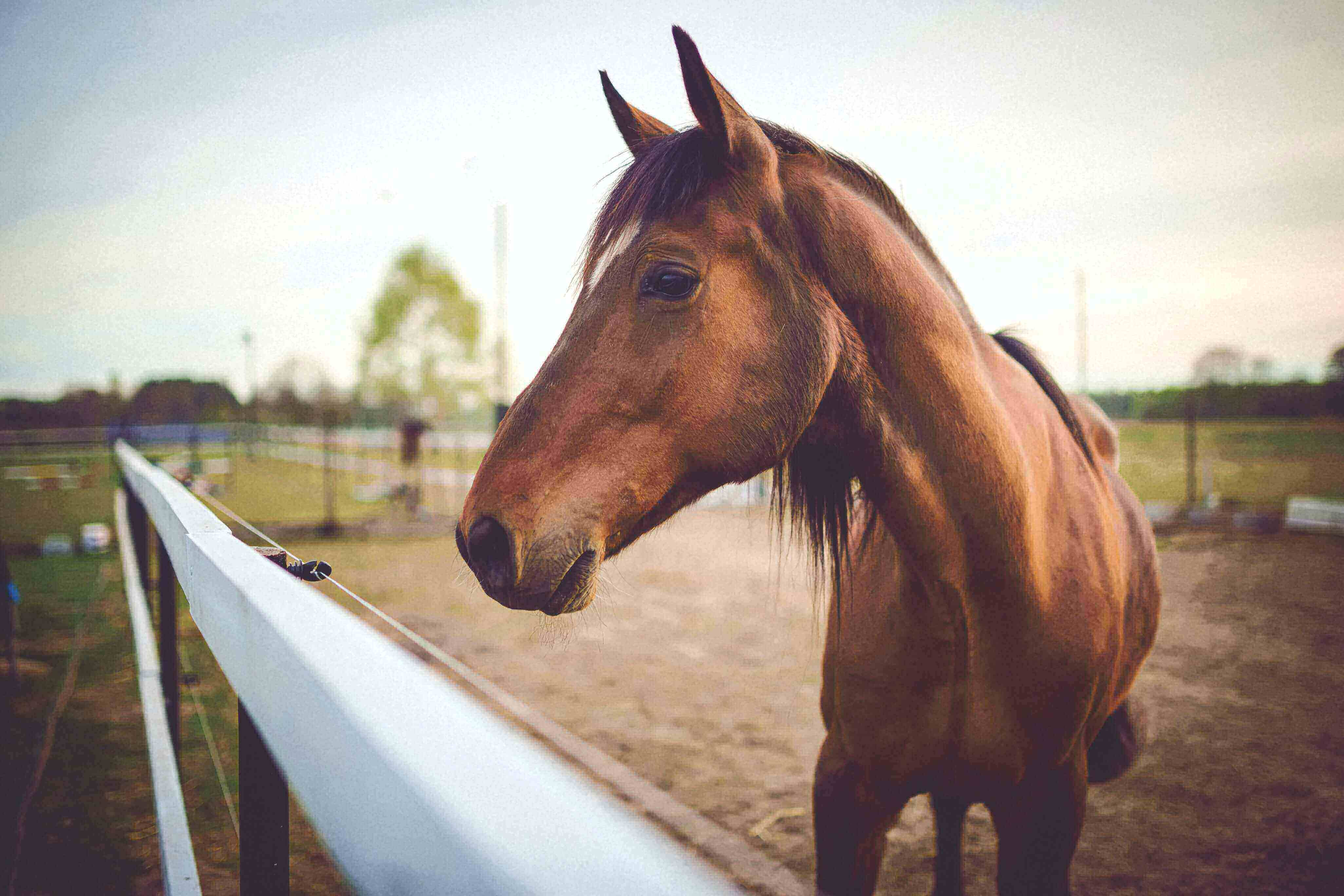 A brown horse with a harness looks down at the camera, behind him is a clear blue sky.